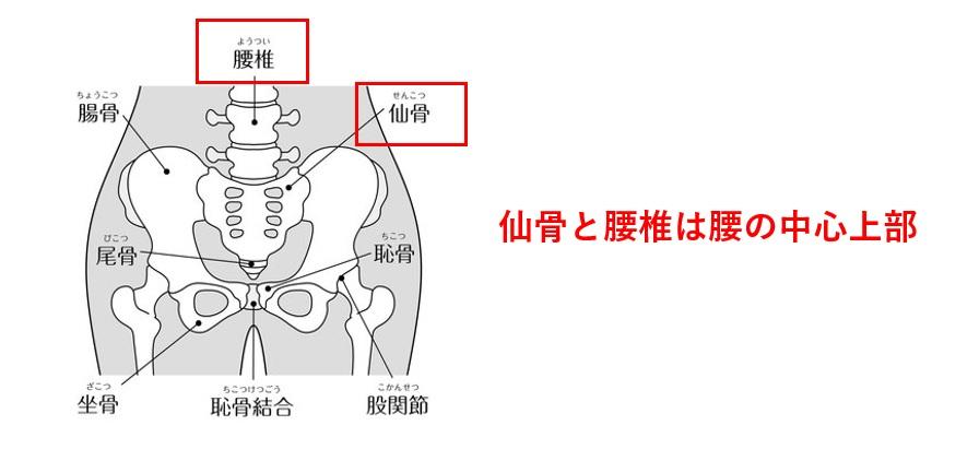 仙骨と腰椎